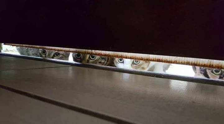 kucing kelakar.jpg